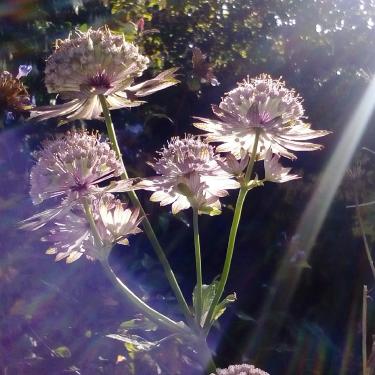 Flowers at Swarthmoor Hall in Summer
